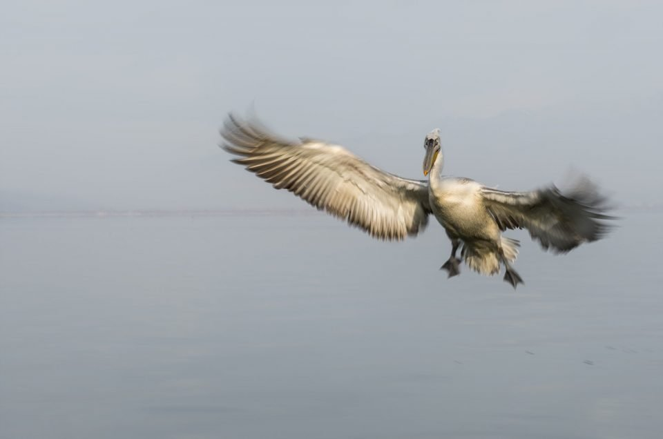 Kerkini Lake: An artificial wonder, an important habitat for birds